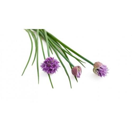 Flor cebollino