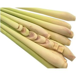 Lemongrass - citronella